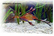 AMMOSORB Eco Aquarium Ammonia Removal Deco Rocks: 2 lb
